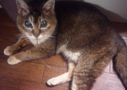 20120821_cat